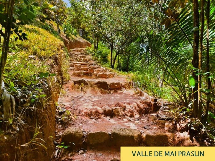 The steps in the UNESCO world heritage site of Vallée de Mai