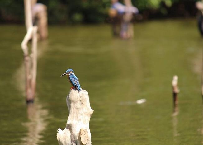 bird spotting near kandy