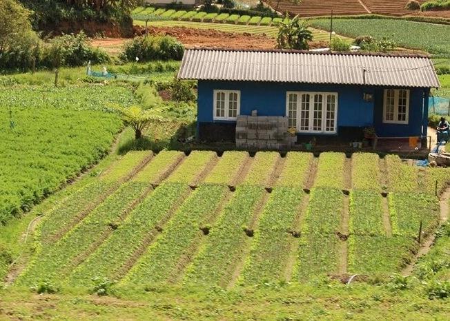 Farms near Nuwara Eliya