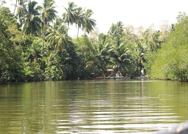 Madu river cruise in Sri Lanka