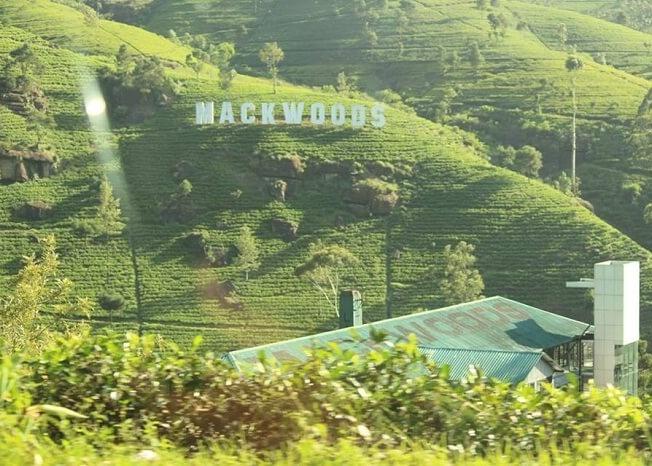 Mackwoods near Nuwara Eliya