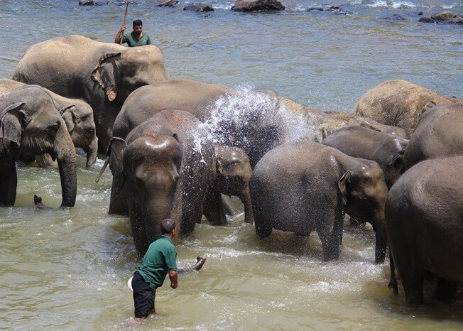 Elephants being given a bath