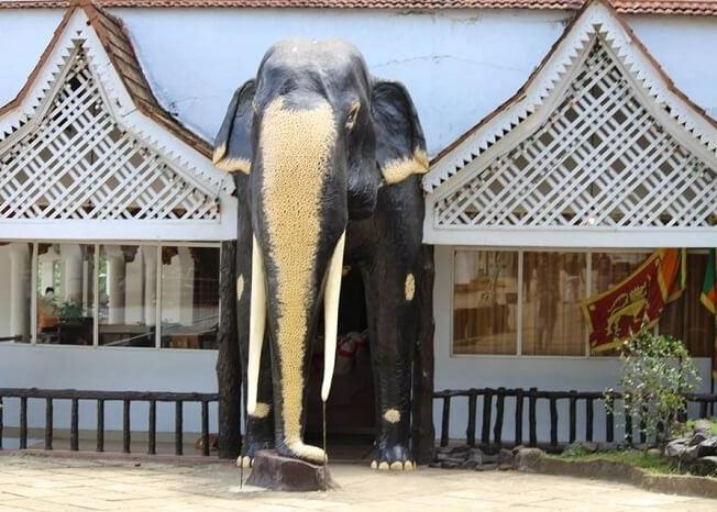 Brilliant elephant model at Pinnavala