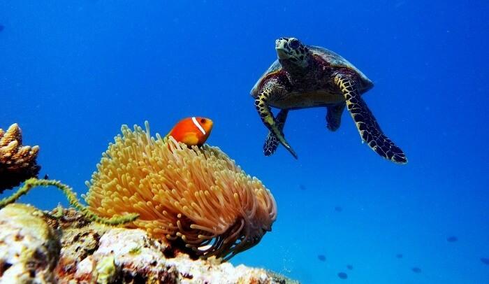 coral reefs in Maldives