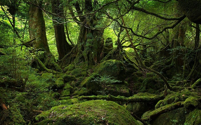 The greens of the Aokigahara suicide forest in Japan