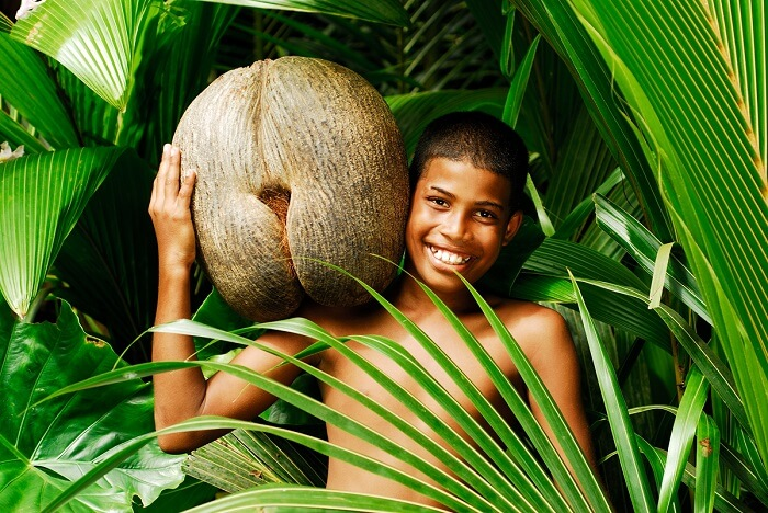 A little boy carrying the suggestively shaped Coco de Mer fruit