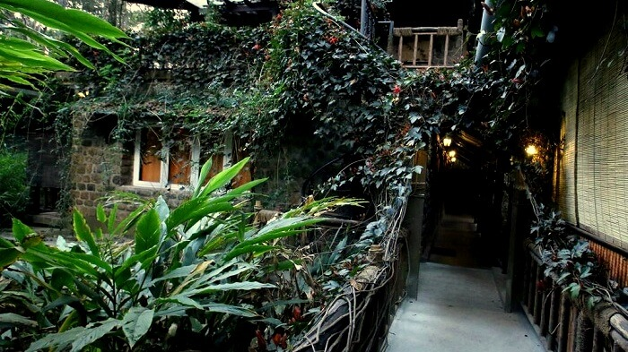 green spaces munnar kerala