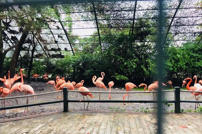 pooja thailand trip day 5 safari world flamingos