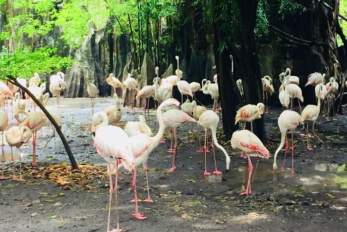 pooja thailand trip day 5 safari world flamingos closeup
