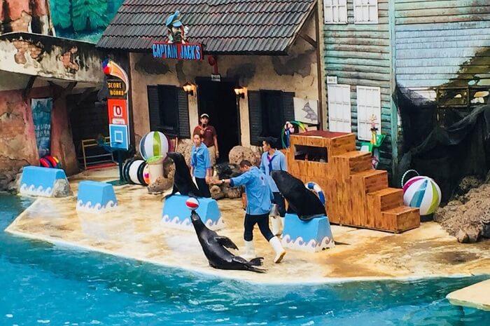 pooja thailand trip day 5 safari world seal show