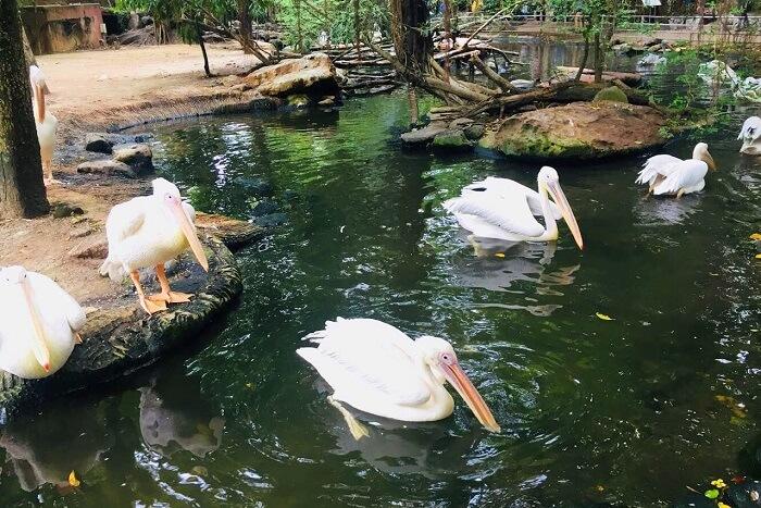 pooja thailand trip day 5 safari world ducks