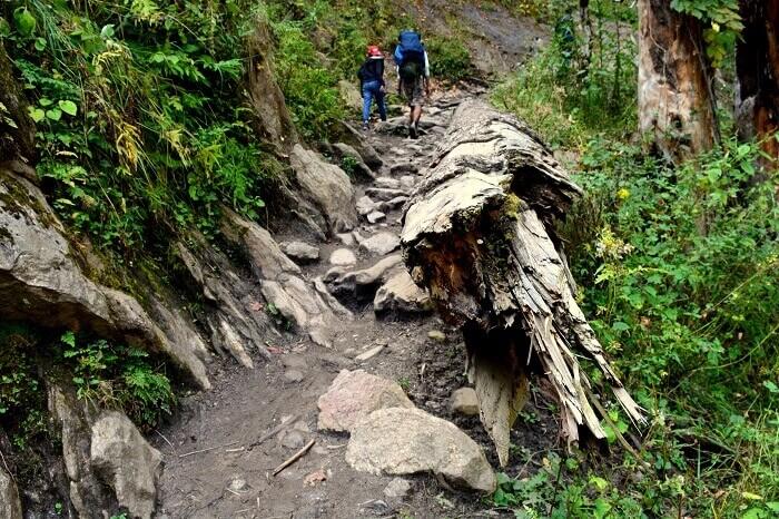 The Kheerganga trek path