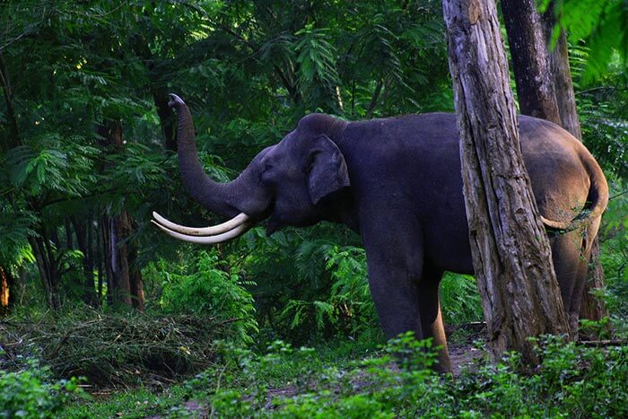 The sanctuary to spot elephants