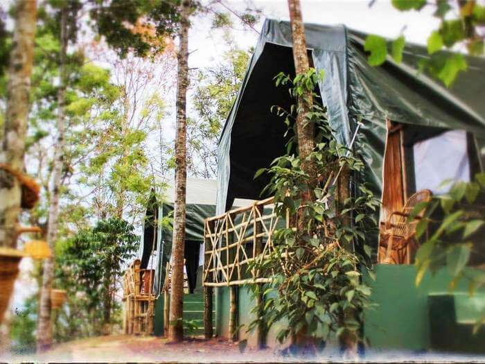 The camp stays at Season 7 are gaining popularity in Munnar