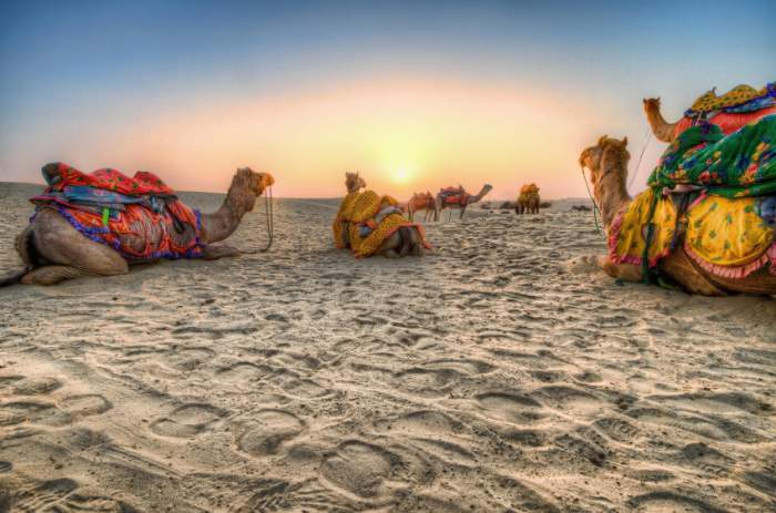camel-in-Rajasthan