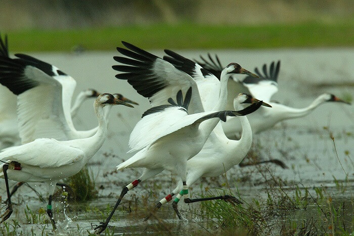 Migratory birds at a water body within the Sultanpur Bird Sanctuary near Delhi