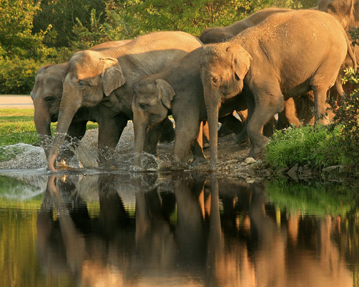 Elephants near a river at Mudumalai National Park, Nilgiri