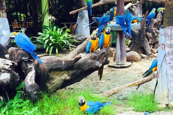 pooja thailand trip day 5 safari world parrots