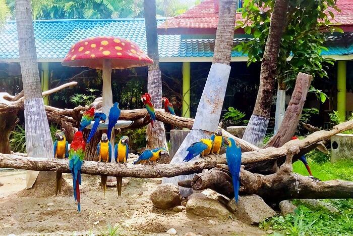 pooja thailand trip day 5 safari world parrots on tree
