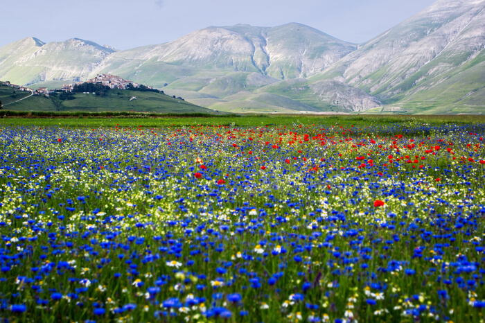 10 Flower Valleys In India Around The World Thatll Make You