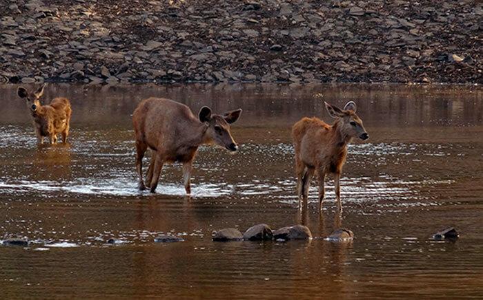 Deer lake in Silvassa