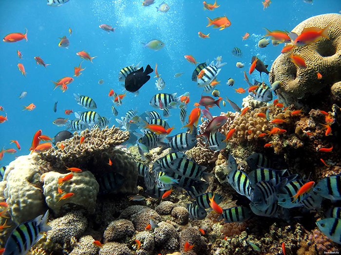 Underwater World of Singapore is the best place to visit in Pattaya