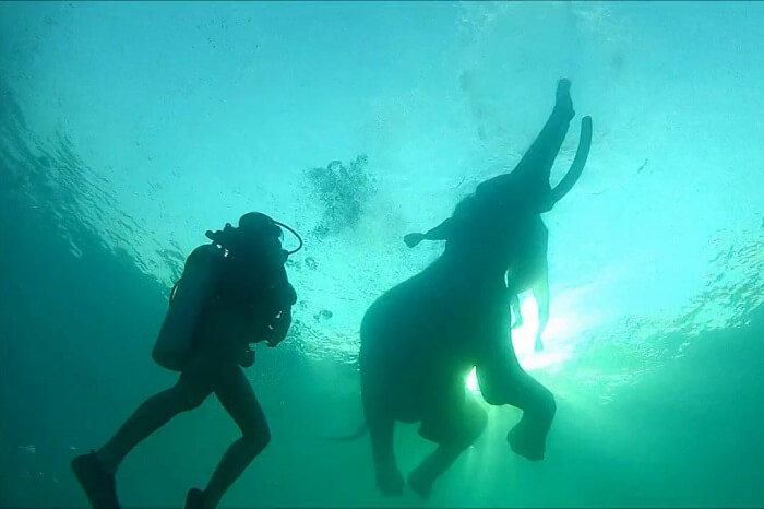 swimming with elephant in Andaman