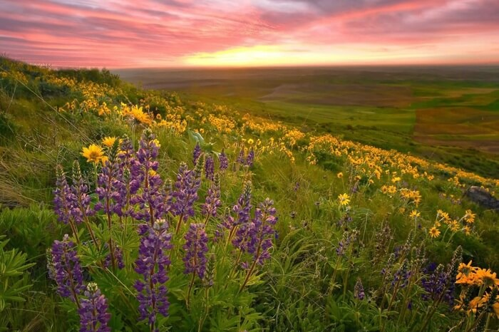 10 flower valleys in india around the world thatll make you purple and yellow flowers on a hill side of valley of flowers mightylinksfo
