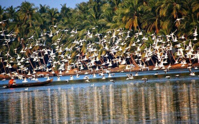 Bird watching with a houseboat stay on Vembanad Lake in Kumarakom, Kerala
