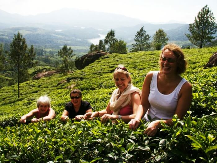 Take a tour of the spice plantations or gardens in Munnar, Thekkady, Kerala