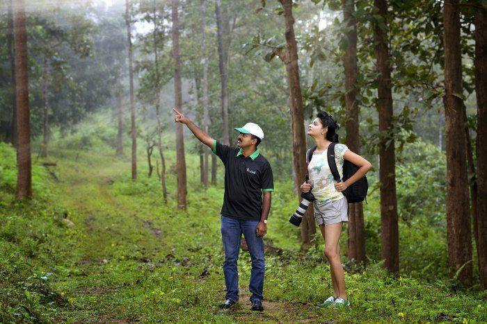 Woods-in Wayanad