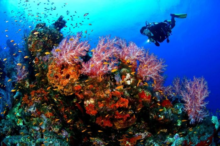 Capture beautiful artificial coral reefs while scuba diving, Mauritius