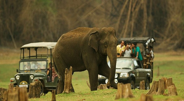 Get close to animals at the Nagarhole National Park, Coorg