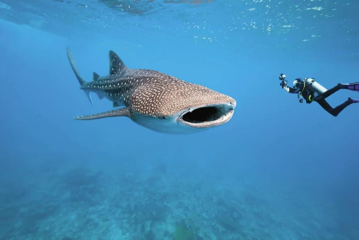 Scuba Diving - experience the beautiful sea-life in Maldives