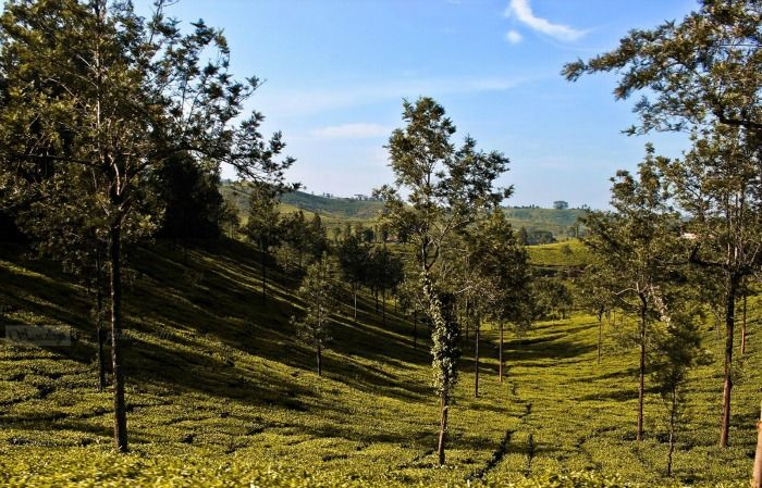 Vythiri - one of the pollution free and relaxing hill stations in South India