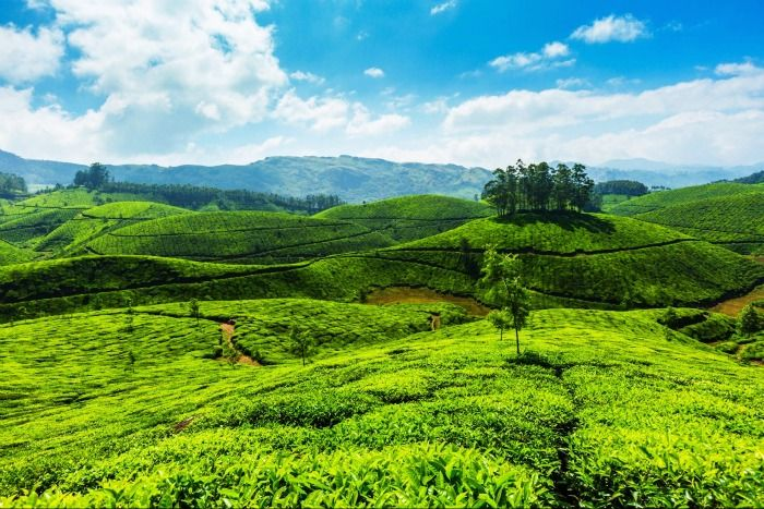 Wayanad Spice Plantations - an idyllic destination for a weekend getaway