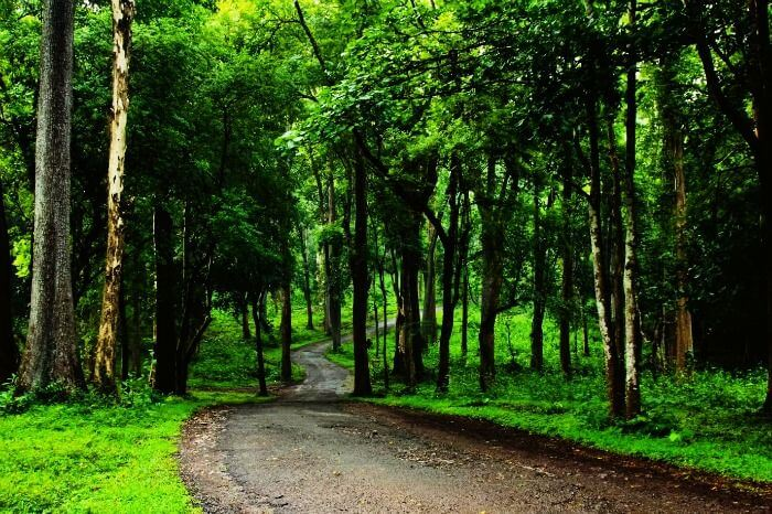 Forests in Wayanad