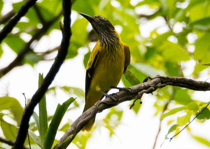 Birds in Karnala Bird Sanctuary