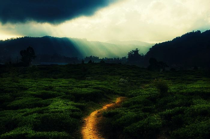 Nuwara Eliya is a picturesque city located in the heart of Sri Lanka