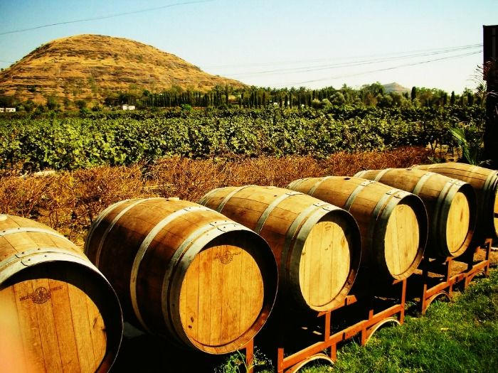 Wine barrels in the Vineyards of Nashik
