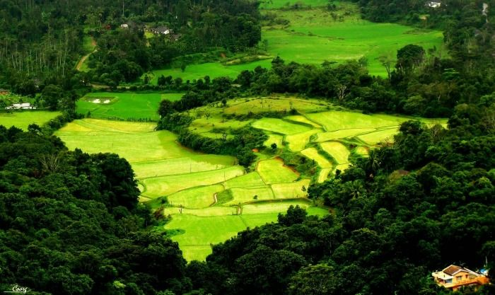 Scenic views of the plantations in Coorg Valley