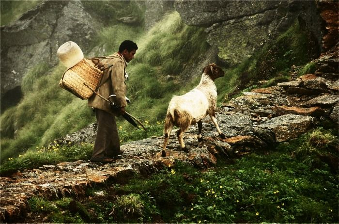 Farmer and his goat at Munsiyari in Kumaon