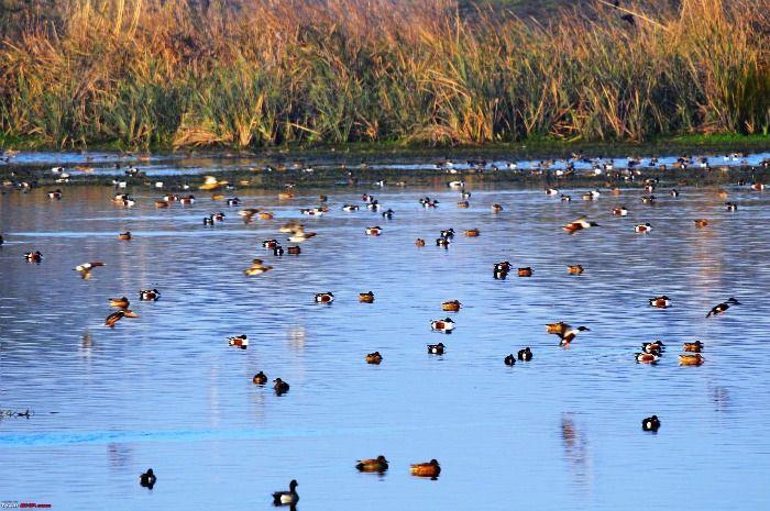 Migratory birds in Sultanpur Bird Sanctuary in New Delhi