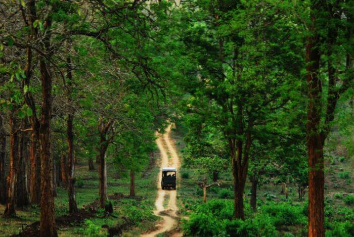 Kabini Wildlife Sanctuary near Bangalore