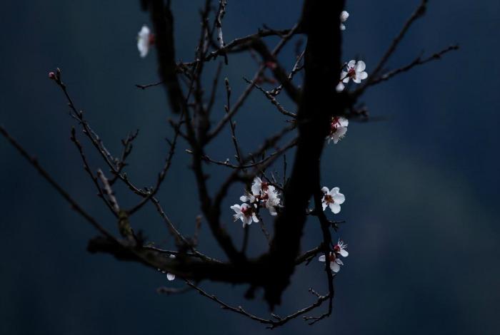 flowers in himachal pradesh