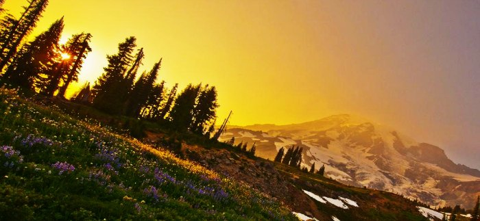 valley of flowers pic