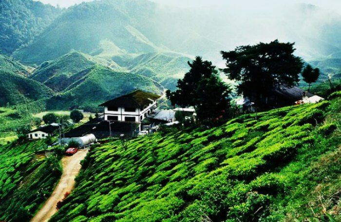 The serene plantations of Cameron Highlands Malaysia