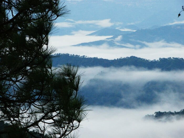 The misty hills of Kasauli make for a perfect honeymoon destination in Himachal Pradesh
