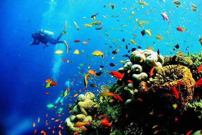 Scuba diving in Sipadan islands in Malaysia