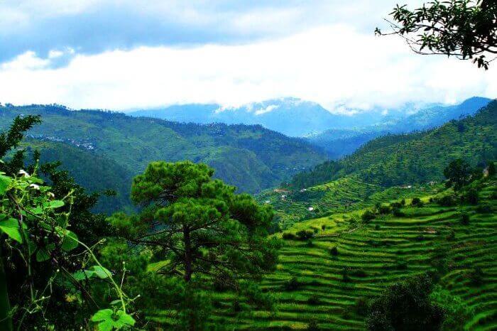 Terrace farming in Ranikhet